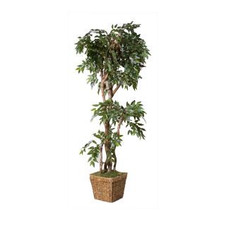 Plant Rental MIS011478