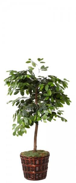 Plant Rental MIS011480