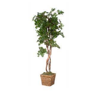 6' Ficus Tree MIS011477