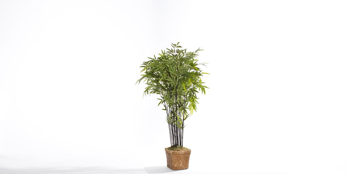 7' Ficus Tree Rental MIS011476