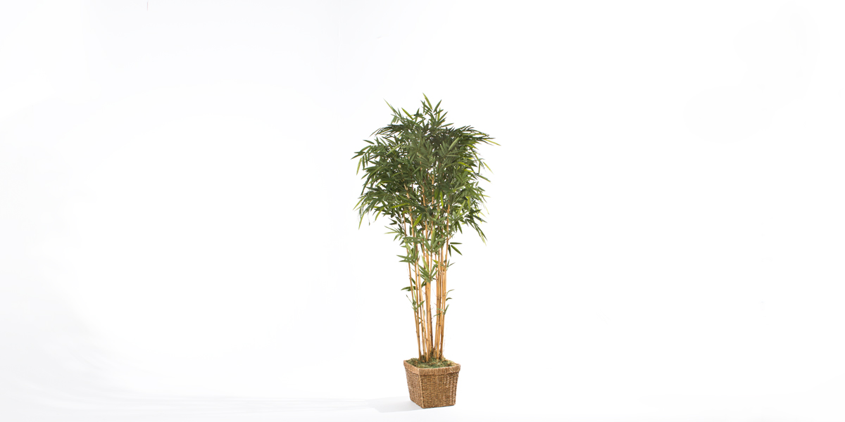 7′ Ficus Tree Rental MIS011481