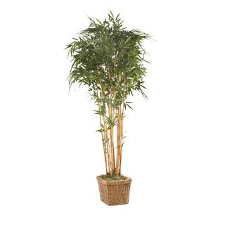 7′ Ficus Tree MIS011481