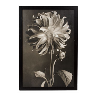 "26.75""w x 38.75""h Black + White Art ART011539"