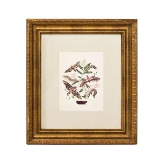 "20.25""w x 23.25""h Insect Art ART007791"