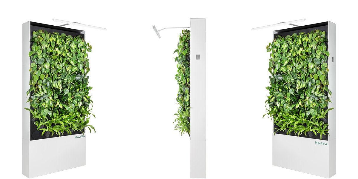 Naava Green Wall