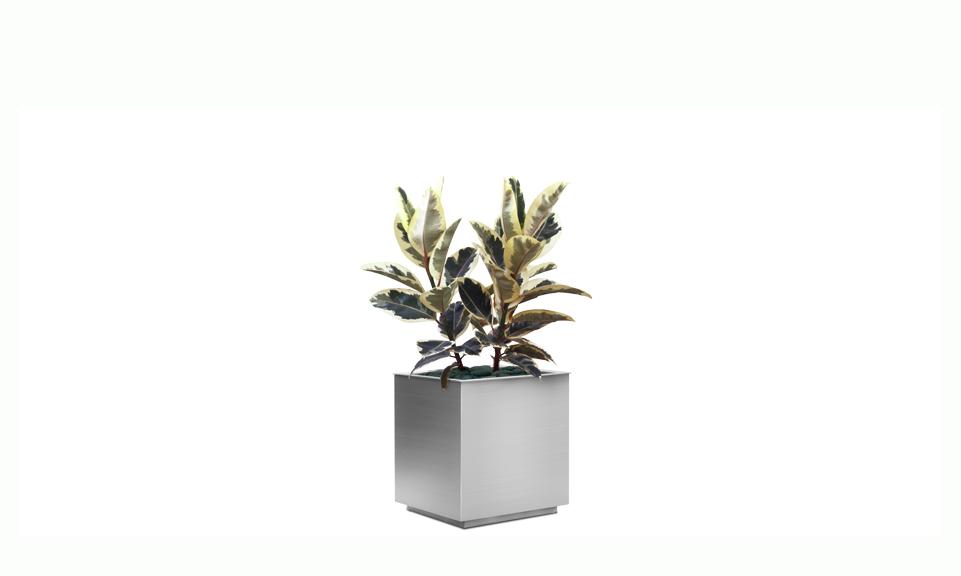 Modoc Planter
