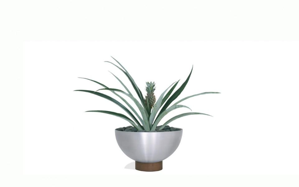 Sangay Planter